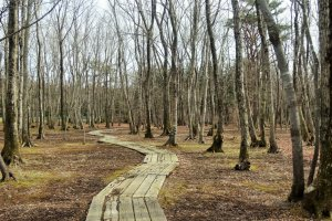 Wooded walking trails crisscross the property