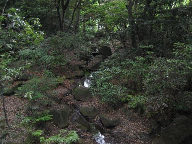 Beautiful forested area on the shrine grounds