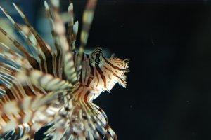 Toute sorte de poissons avec des formes uniques