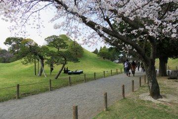 Suizenji Cherry Blossom Festival