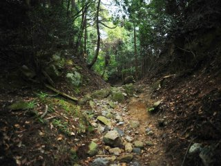 A stone-strewn path