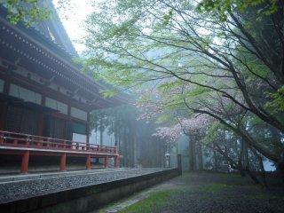 Le hall de lecture Daikodo et encore quelques cerisiers en fleurs