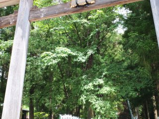A large beautiful torii gate greats visitors