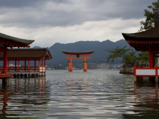 The enormous torii (gate) floating at high tide