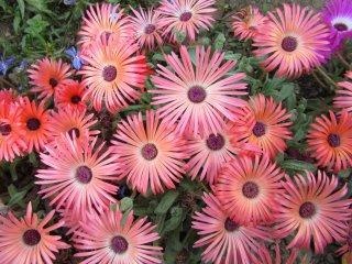 At Ashikaga Flower park