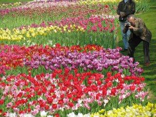 At Hamamatsu Flower Park