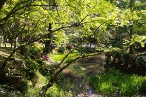 Gorgeous garden views of Manyo Botanical Garden