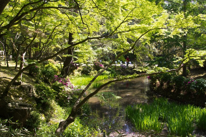 Wisteria Season in Nara - Nara - Japan Travel - Tourism Guide, Japan Map and ...