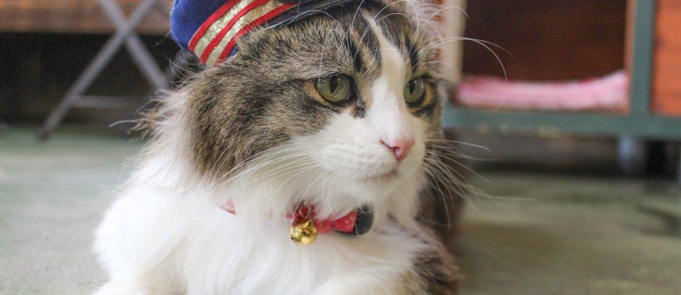 Gato Chefe de Estação em Ashinomaki Onsen