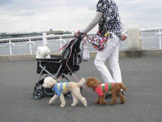 Yokohama stroll :)