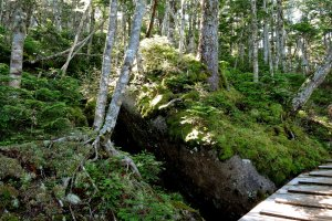 Forest understory of moss, rocks, ferns, young trees and low shrubs