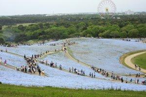 Hitachi Seaside Park