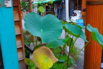 Cool Sakuragicho and Noge District