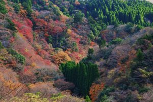 The palette of the forest