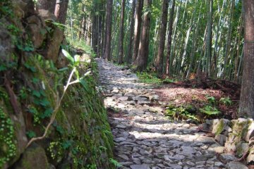 "Kumano Kodo-The ""Way of St. James"" of Japan"