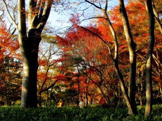 Rich fall colors form the backdrop of the park in the autumn