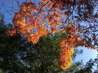 Soleil et ciel bleu d'automne