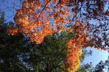 Paysage d'Automne au Parc Yoyogi
