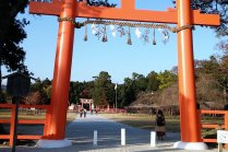 ใบไม้เปลี่ยนสีที่ศาลเจ้าคะมิคะโมะ