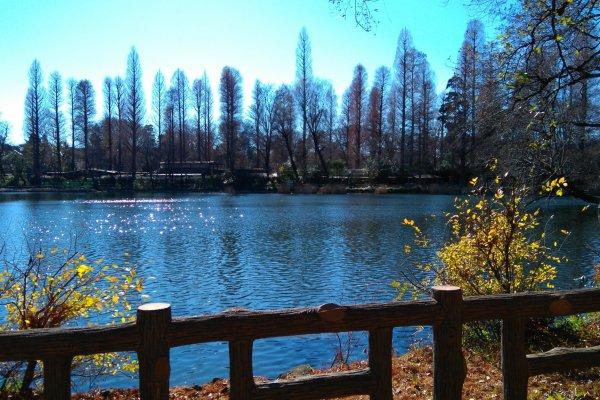 Lake Inokashira