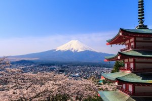 Red pagoda, Mount Fuji and cherry blossoms
