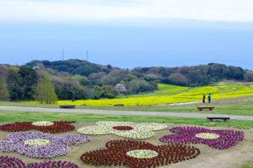 Hanasajiki in Spring