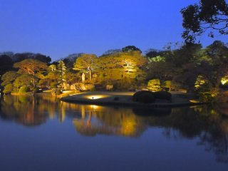 Crowds throng the shidare zakura tree in the daytime; in the evening the pond is unusually quiet