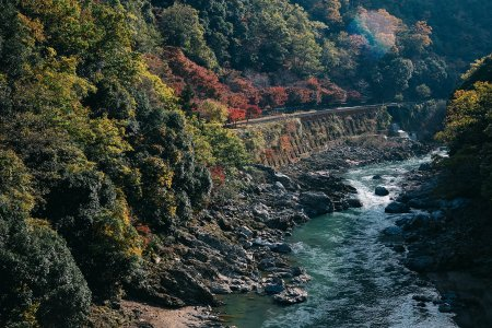 Lost and Found in Arashiyama