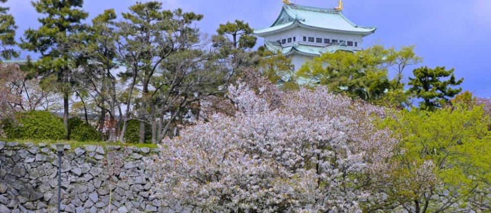 名古屋城のお花見