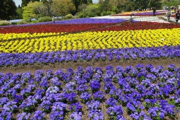 حديقة الأزهار بكوجو