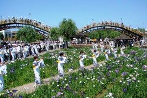 Dancers amongst the irises
