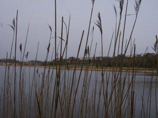 The marsh lands around Kushiro