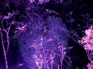 Spiders are caught in the illumination as well