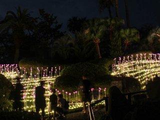 Lotus flowers illumination hill