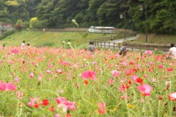 Kurihama Flower World