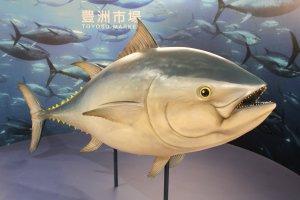 Welcome to Toyosu Fish Market