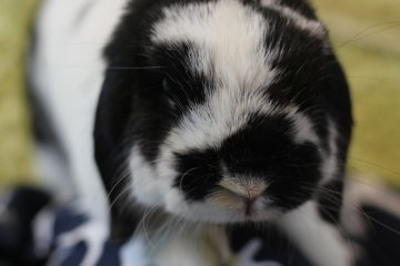 Ra.agf: Rabbit and grow fat