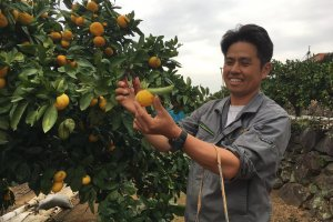 Our guide explains how to pick mandarin oranges