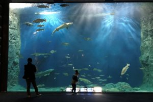 Though smaller than similar aquariums in Osaka and Okinawa, it is a more intimate experience here in Chitose
