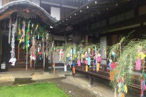 Wishes written on small pieces of paper and hung on bamboo branches.