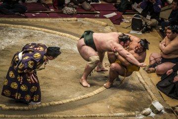The Language of Sumo