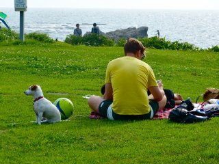 People and dogs scatter to their own favorite spots
