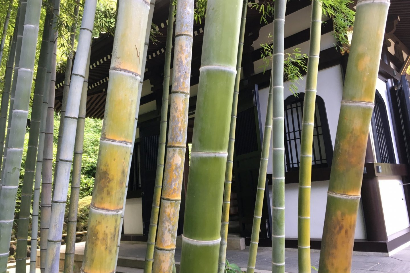 What difference does a bamboo grove make? A temple without bamboos seemed unimaginable