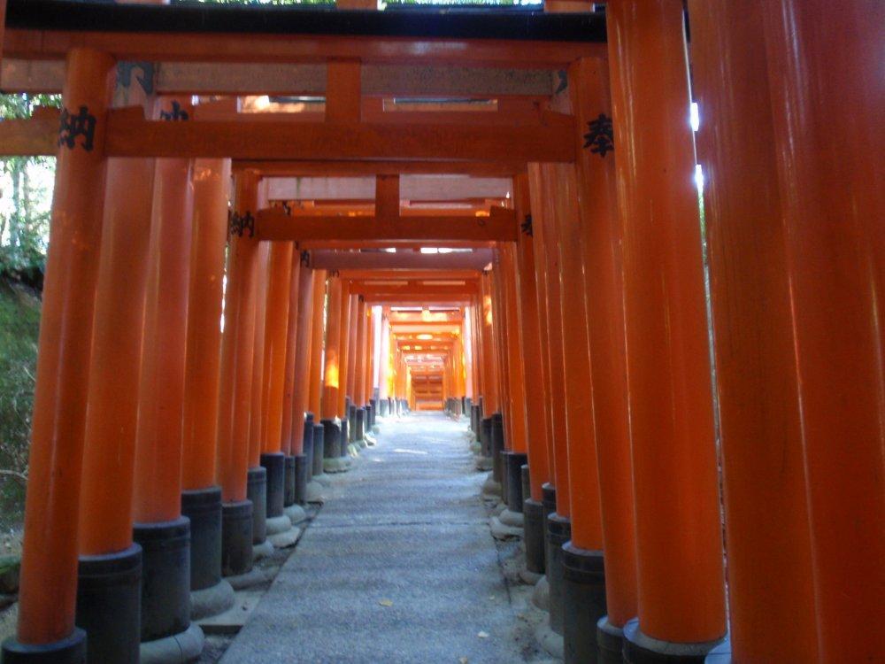 Corridors of orange meander up the hills