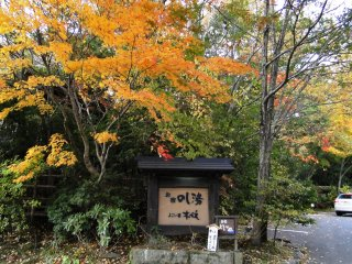 A tree hangs beautifully over a ryokan sign