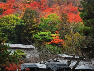 The rickshaw is a traditional vehicle in Arashiyama