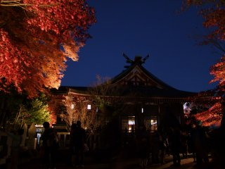 Afuri Jinja Shrine lights up the trees at night during this season only
