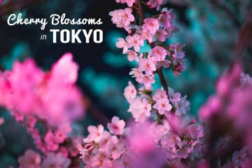 One-day Photography Workshop (group or private): Tokyo Cherry Blossoms