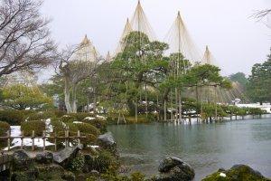 Yukitsuri in Kenrokuen