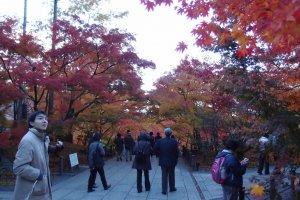 ทางเดินเต็มไปด้วยใบไม้เปลี่ยนสี